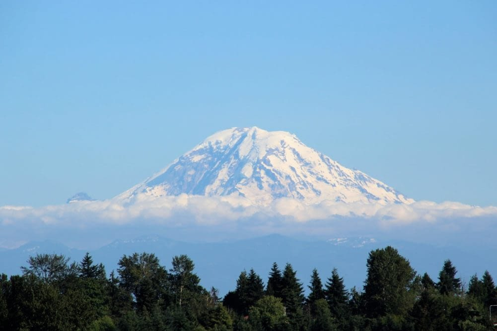 Snow capped Mount Rainier with evergreen trees in the foreground